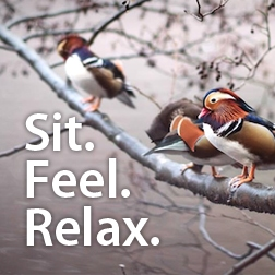 relaxation blog